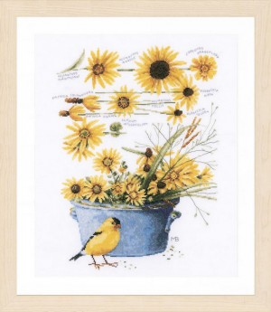 Lanarte PN-0172914 Helianthus sunflowers