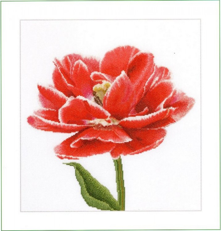 Набор для вышивания Thea Gouverneur 520 Red-White Edged Early Double Tulip